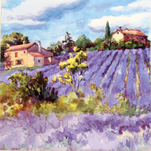 Salveta Lavander fields forever SP1
