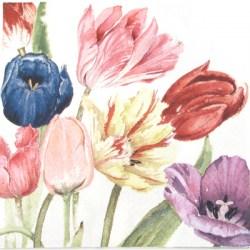 Salveta Amsterdam tulipani