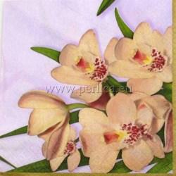 Orhideje-2