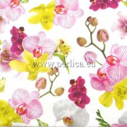 Orhideje1