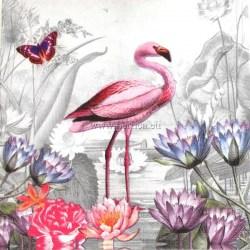 Rajska-ptica