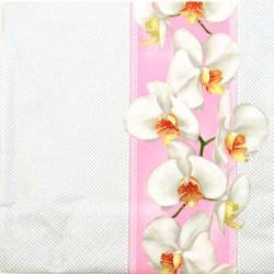 Salveta-Orhideje