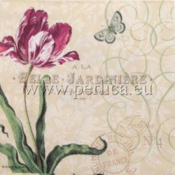 Salveta-Tulipan