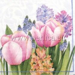 Salveta-Tulipani