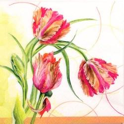 Salveta-Tulips
