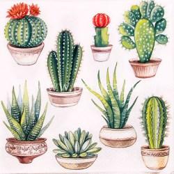 Salveta-kaktusi8
