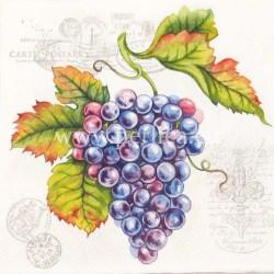 Salveta-modro-grozdje