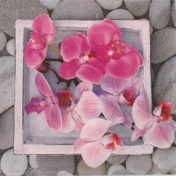 Salveta-orchids-in-frame