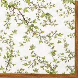 Salveta-zel-grancice