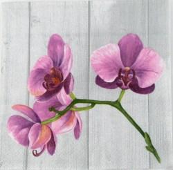 Salveta_Orhideja_4f526852c37ec.jpg