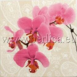 Salvete-Orhideje