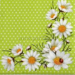 cvijece-margarete-2