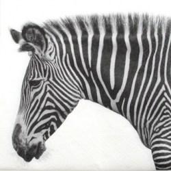 salveta zebra.jpg