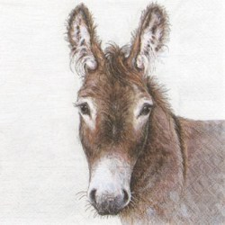 Salveta Young Donkey.jpg